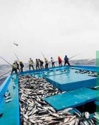 Pengaruh Cuaca Terhadap Tangkapan Ikan